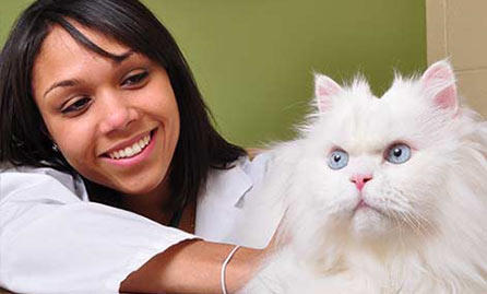 Veterinary Care in Ypsilanti & Ann Arbor MI